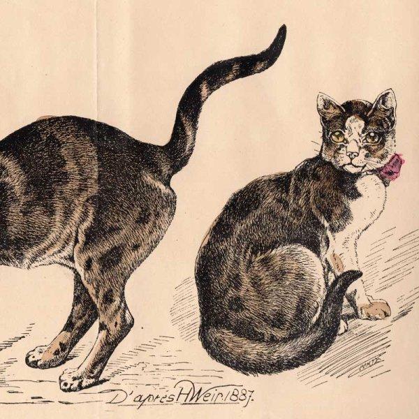 画像1: アンティーク挿絵:2匹のネコ/19世紀 (1)